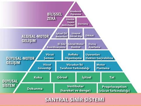 Ergoterapi_Santral_Sinir_Sistemi