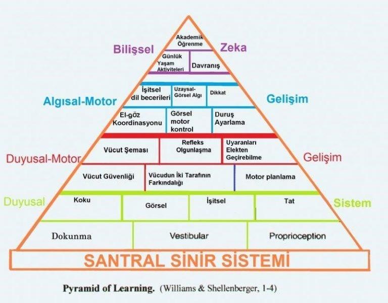 Santral_Sinir_Sistemi_Duyu_Bütünleme